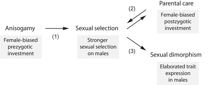Sexual Selection Traits